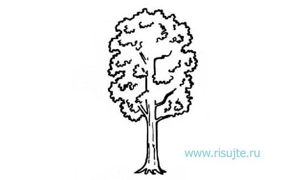 04.Как нарисовать дерево поэтапно – урок для начинающих