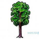 Как нарисовать дерево поэтапно – урок для начинающих