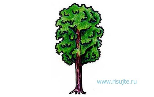 05.Как нарисовать дерево поэтапно – урок для начинающих